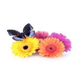 Fototapety Frühlingsdeko – Schmetterling und Gerbera