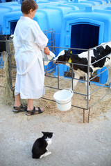 Back of boy in white coat feeding calf at cow farm and cat sit