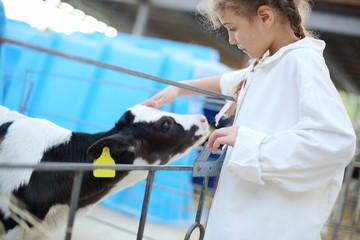 Pretty little girl in white robe strokes small cute calf