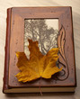 Close up of an album and Autumn leaves.