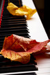 Autumn leaves on the keys