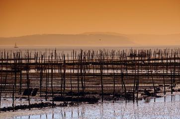 ostréiculture dans le bassin d'Arcachon