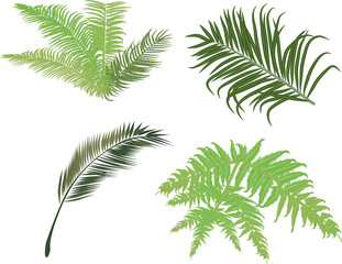 green fern and palm leaves isolated on white