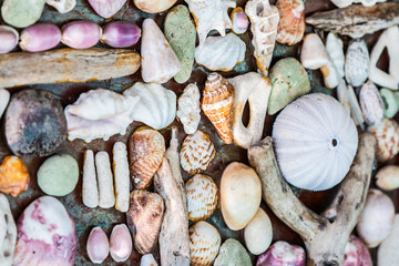 Wall of seashell