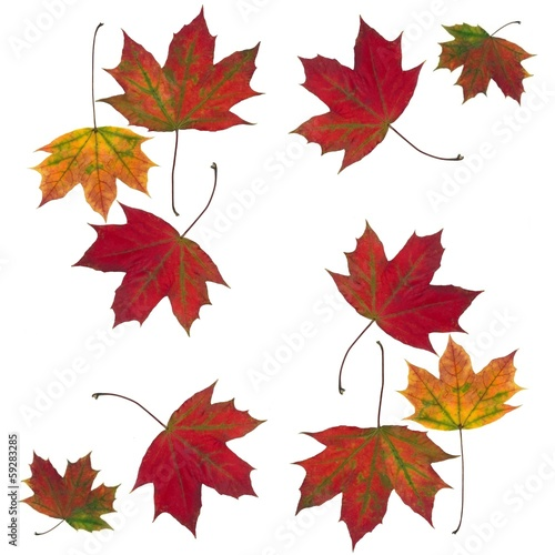 leaves as maple tree as background