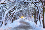 Winter scenery in snowy park of Gdansk, Poland