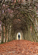 Man walking in a tunnel of trees on a autumn day.