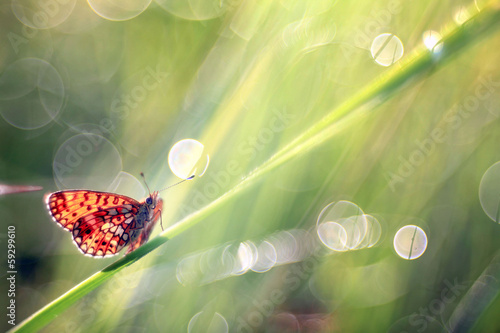 butterfly on a blade of grass dew freshness