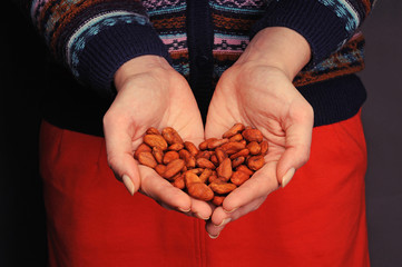 Cacao beans in the hands