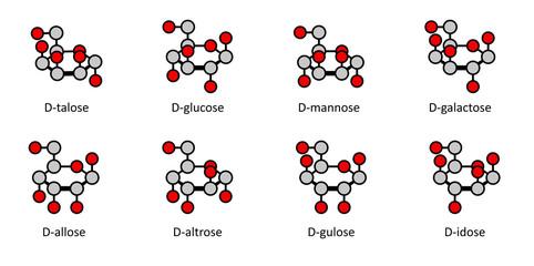 D-aldohexose sugars: allose, altrose, glucose, mannose, gulose