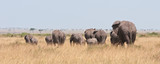 back view of a herd of elephants in the savannah