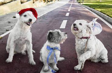 Perros, regalos en Navidad y después abandonados.