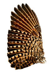 Wing of a Flicker Bird