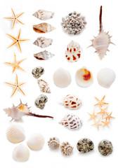 貝殻のコラージュ