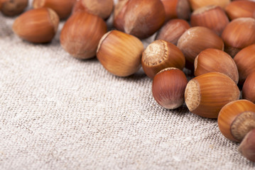 Nuts filberts isolated on white background. Space for text at