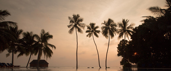 Tree palms in sunset scenary