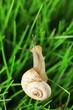 Beautiful snail on green grass, close up