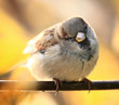 sparrow on a branch of the autumn