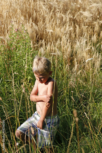 Blond boy in high grainfield