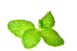 Fresh mint close up isolated
