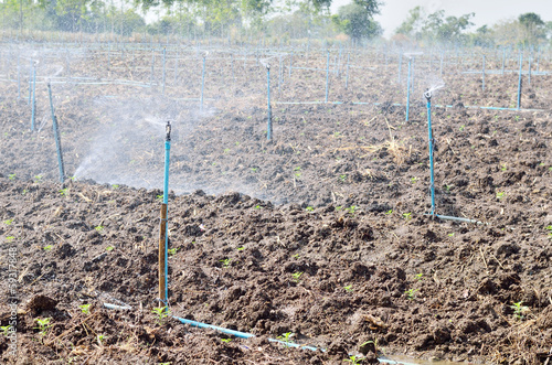 Watering system for plantation