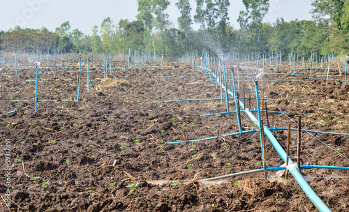 Watering system for plantation - 59317891