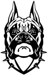 boxer dog head black white