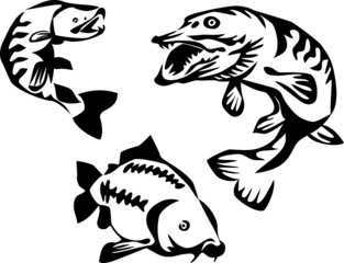 stylized trout pike and carp