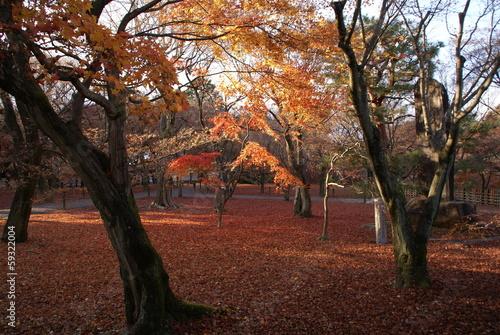 京都の秋の夕方