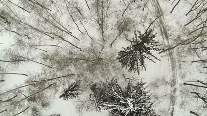 Winter forest. Top rotation  view. Aerial