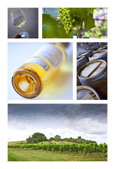 Vignes et viticulture