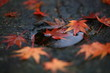 観世音寺の紅葉