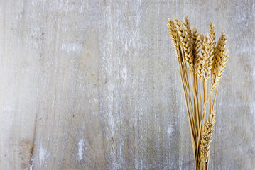 wheat plants on wooden background