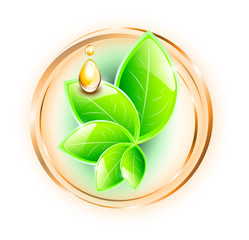 Green plant with oil drop in rings