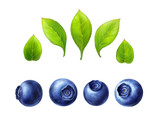 Blueberry set, leaves and berries isolated on white background.