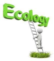 omino bianco ecology