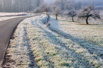 pommier au bord de route en hiver