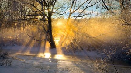sunbeams filtered through bare tree