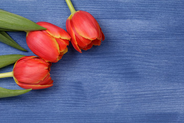 tulip on wooden table