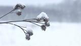 Bur closeup shot. Winter scenery background poster