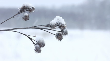 Bur closeup shot. Winter scenery background