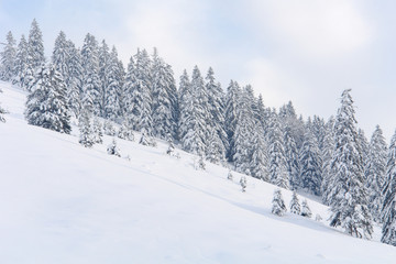 Snowy Trees I