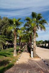 Palmengarten am Strand