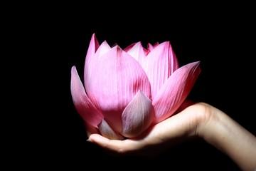 main & lotus