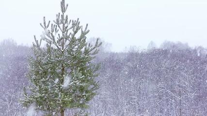 Calm winter scene. Snow falling slowly.