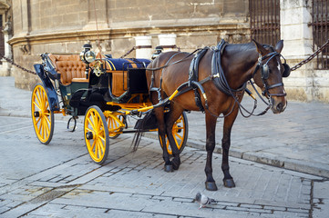Black  horse and traditional tourist carriage in Sevilla