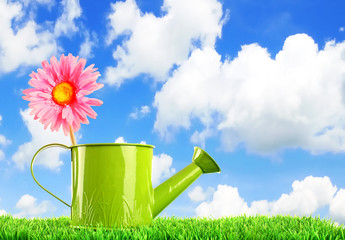 Pink flower in a watering can - gardening concept