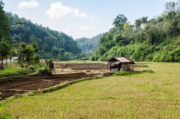 Landing of Rice fields