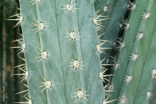 Close-up of Cactus