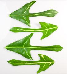 Arrow of beautiful green leaves